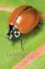 9780888643810 : ladybugs-of-alberta-acorn