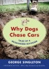 9781611172454 : why-dogs-chase-cars-singleton